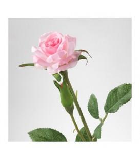گل رز SMYCKA